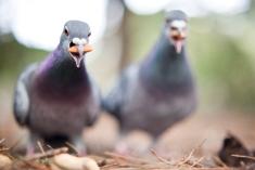 mark_scadding_piccioni